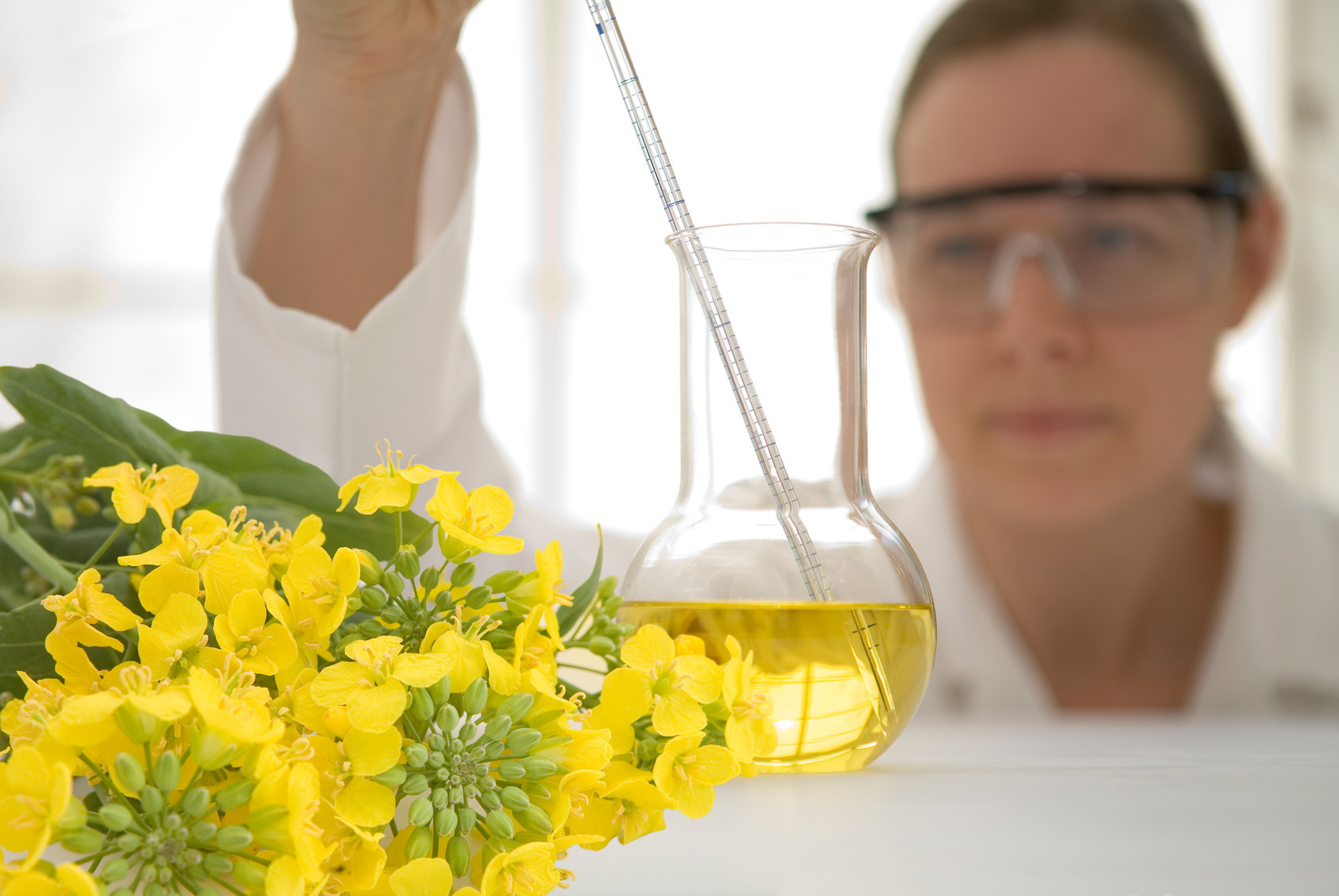 Laboratory worker with canola flowers - biofuels concept